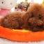 เบาะนอนสุนัขและแมวรูปผลไม้ไซส์ใหญ่ thumbnail 2