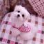 เสื้อสุนัขลายกระต่ายชมพู thumbnail 2